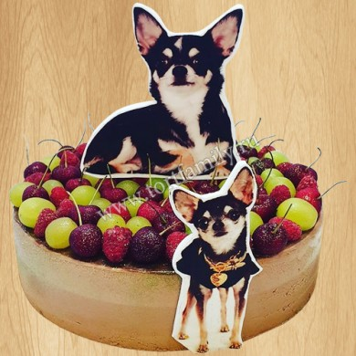 Торт с собакой чихуахуа